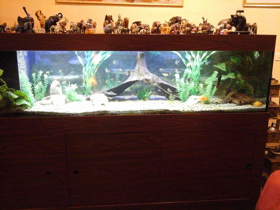 L 39 le aux reptiles for Aquarium tortue aquatique